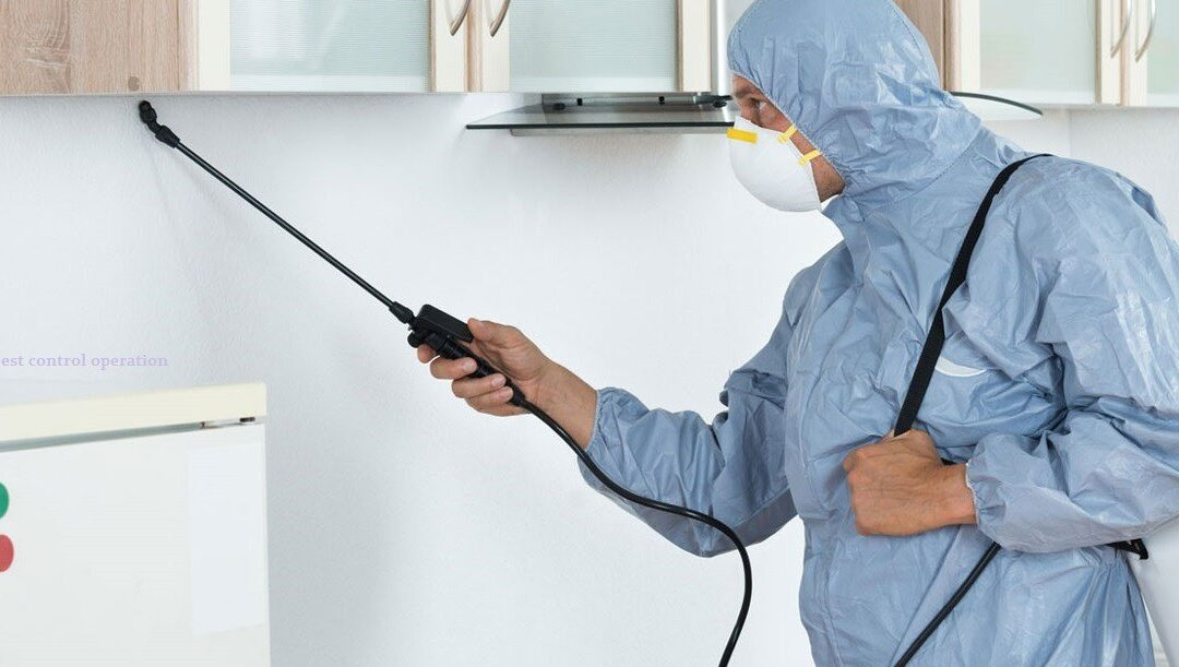 Why pest control Melbourne service is essential for every home?