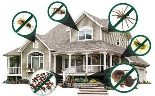 Reasons why pest control service is a necessity for every household?